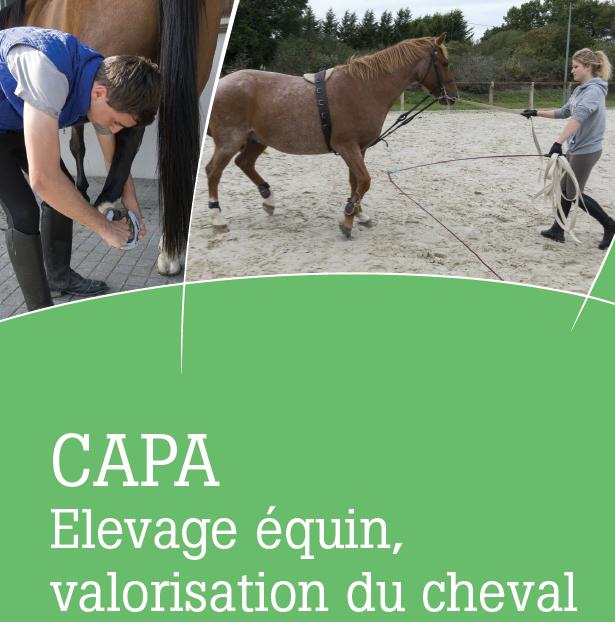 capa-elevage-equin-valorisation-du-cheval